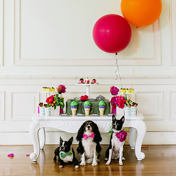 A party FOR dogs! So cute!